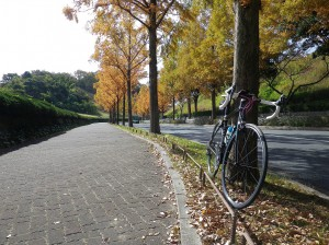 紅葉ライド 森林植物園~再度公園