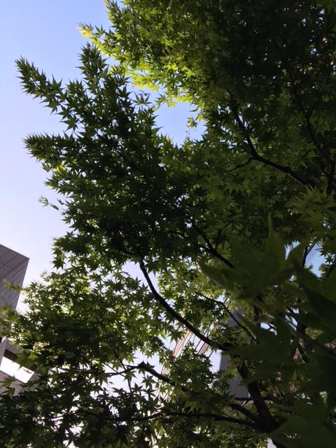 【延期のお知らせ】リベンジモーニングライド開催!