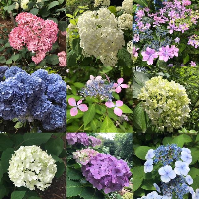 【昭島サイクリング情報】6月もお花見できます【スポット紹介】