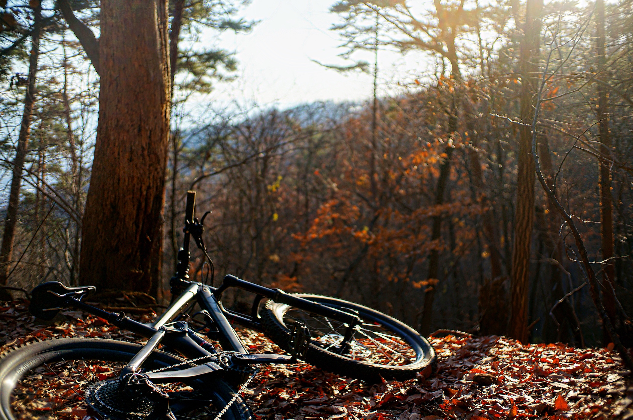 [MTB]寒いからこそ自転車に乗ろう!!冬のマストアイテムと共にマウンテンバイクで山散策ライド🚵♀️