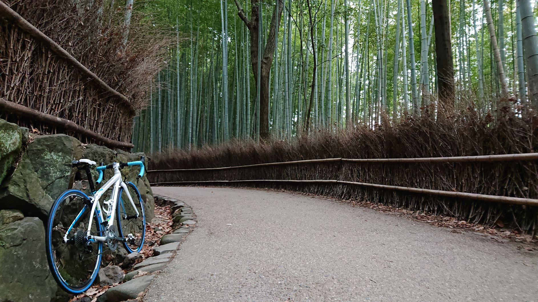 のんびりサイクリング♪名古屋~京都嵐山153km真冬ライド!!