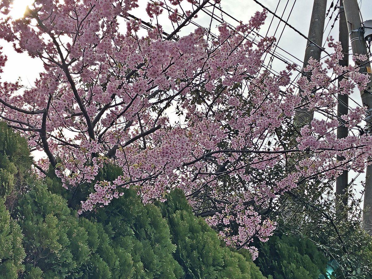【横浜】ストアイベント開催しております!