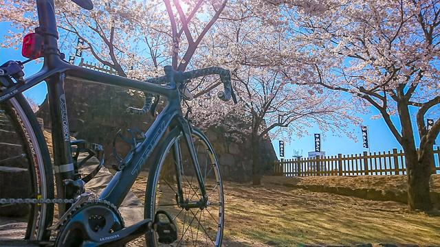 甲府に甲斐市に笛吹市──山梨初心者・スタッフ桑田のロードバイクで桜満喫ライド!