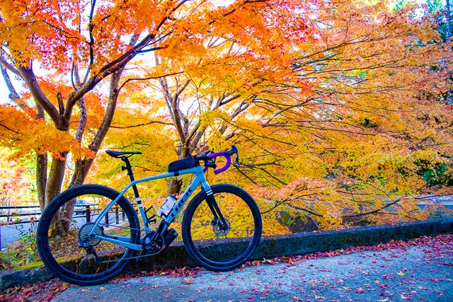 秋真っ盛り!! グラベルロード Checkpoint SL5でゆく、河口湖紅葉ライド