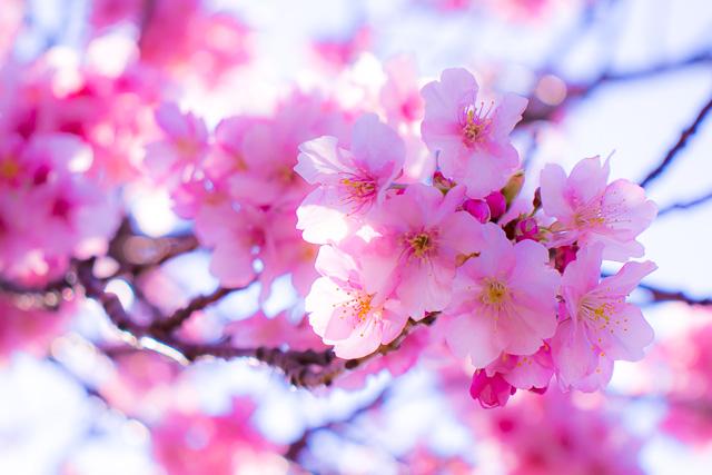 【営業時間短縮延長】3月29日(日)まで営業時間短縮を延長いたします。