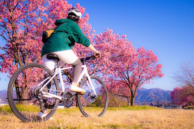 春の荒川サイクリングロードでのんびりお花見ライドを楽しもう