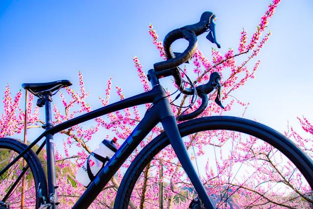 ロードバイクÉmonda ALR4 Discでのんびり桃の花サイクリング🍑