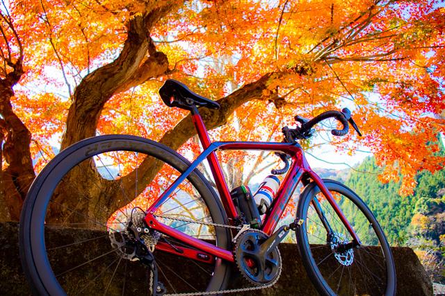 Domane SL5で晩秋の芦川渓谷を紅葉ライド🍁
